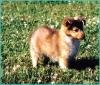 VenLightChaser - éleveur canin Dogzer