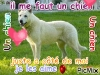 chicomonpremierchien