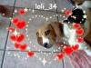 loli_34 - éleveur canin Dogzer