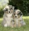 mimine_37 - éleveur canin Dogzer