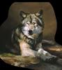 annalise725 - éleveur canin Dogzer