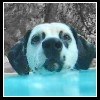 x--Clara--x - éleveur canin Dogzer