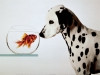 Broxx - éleveur canin Dogzer