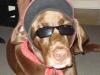 norton - éleveur canin Dogzer