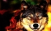zoe1211 - éleveur canin Dogzer