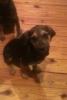 lovetolive - éleveur canin Dogzer