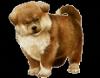 laura67370 - éleveur canin Dogzer