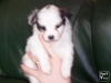 lovely55555 - éleveur canin Dogzer