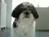 carla-marie2001 - éleveur canin Dogzer