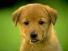 yala24 - éleveur canin Dogzer