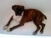 valent20 - éleveur canin Dogzer