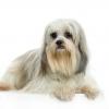 xtheoxx - éleveur canin Dogzer