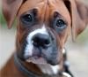 laeticia.chien - éleveur canin Dogzer