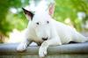 Maria_ - éleveur canin Dogzer