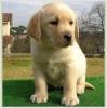 CLAAiiRE - éleveur canin Dogzer