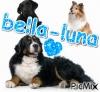 bella-luna - éleveur canin Dogzer