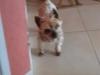 sweetie33 - éleveur canin Dogzer