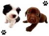 alev11 - éleveur canin Dogzer