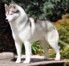 clorivina - éleveur canin Dogzer