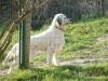Ciboul3tt3 - éleveur canin Dogzer