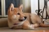 gege_joly - éleveur canin Dogzer