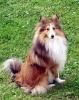 Leeyla - éleveur canin Dogzer