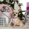 titine1111 - éleveur canin Dogzer
