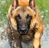 Twilight77 - éleveur canin Dogzer