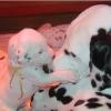 loriedu15 - éleveur canin Dogzer