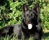 Douce4 - éleveur canin Dogzer