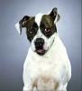 avibel - éleveur canin Dogzer
