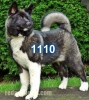 1110 - éleveur canin Dogzer