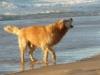 emmalegaallaye - éleveur canin Dogzer