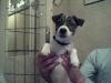 lili584 - éleveur canin Dogzer