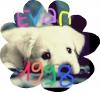 Evan1998 - éleveur canin Dogzer