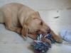 Tanawel - éleveur canin Dogzer