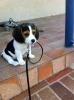 Jeromyne - éleveur canin Dogzer
