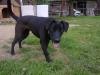 Louisa150 - éleveur canin Dogzer