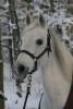 celinegio - éleveur canin Dogzer
