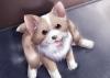 Cleme09 - éleveur canin Dogzer