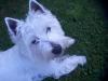 amandine-101 - éleveur canin Dogzer