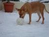 nunu76140 - éleveur canin Dogzer