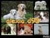 alexia.d98 - éleveur canin Dogzer