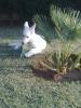 avic-huesca-duran - éleveur canin Dogzer