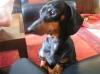 EtoileDeJais - éleveur canin Dogzer