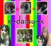 x--daiisy--x - éleveur canin Dogzer
