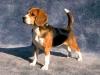kroo - éleveur canin Dogzer