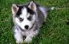Marisol_1999 - éleveur canin Dogzer