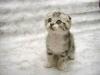 alexia1886 - éleveur canin Dogzer