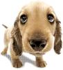 mamzelleMat - éleveur canin Dogzer
